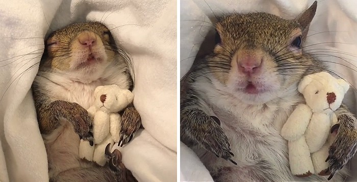 Internet peeps can't just get over how adorable this Jill the squirrel is.