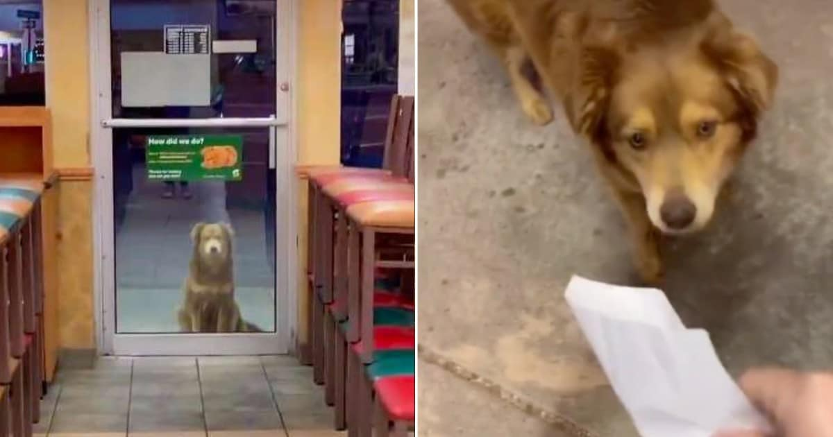 Homeless dog visits Subway shop every night for a free meal - my positive outlooks