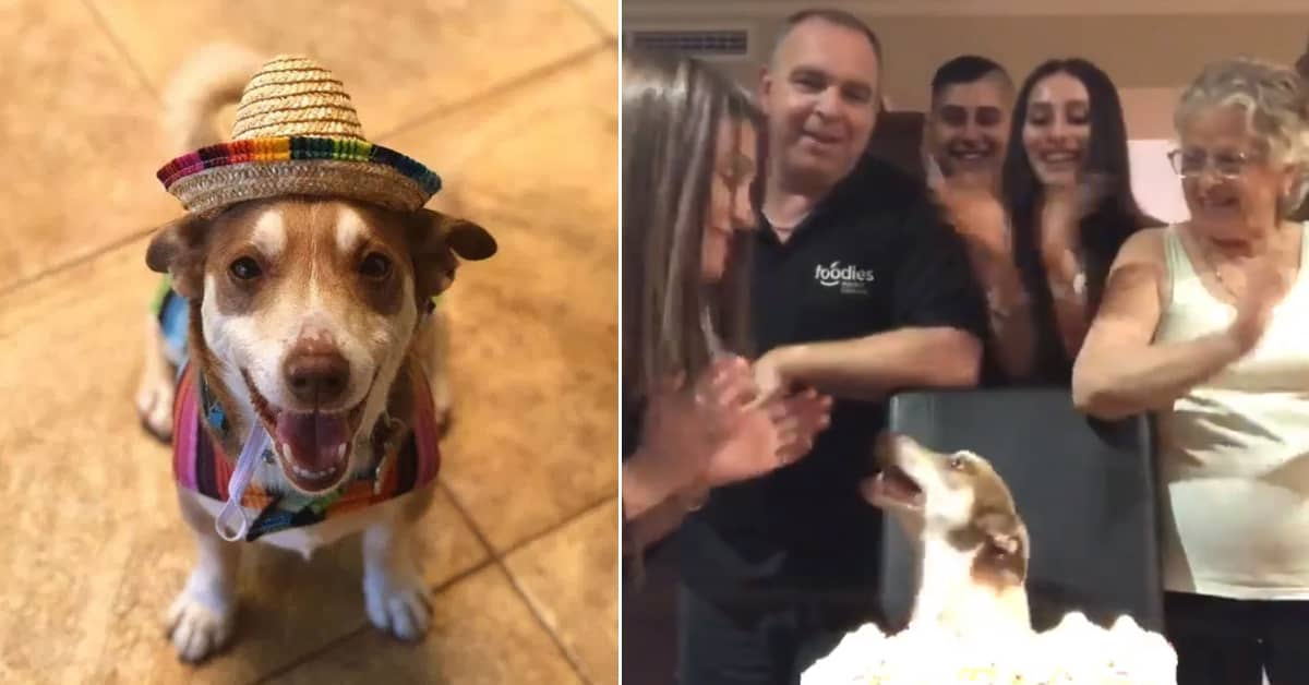 This senior dog can't stop 'smiling' because his family threw him a surprise birthday party - my positive outlooks