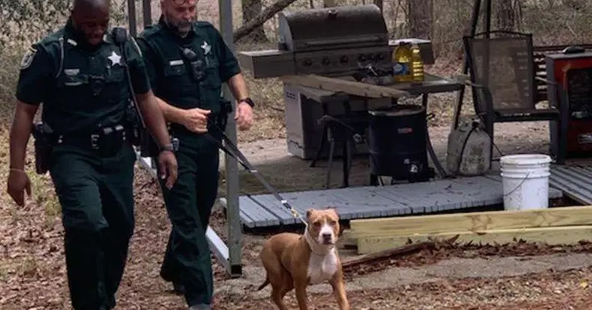 Hero dog stands on guard protecting his young lost owner until the rescuers arrive - my positive outlooks