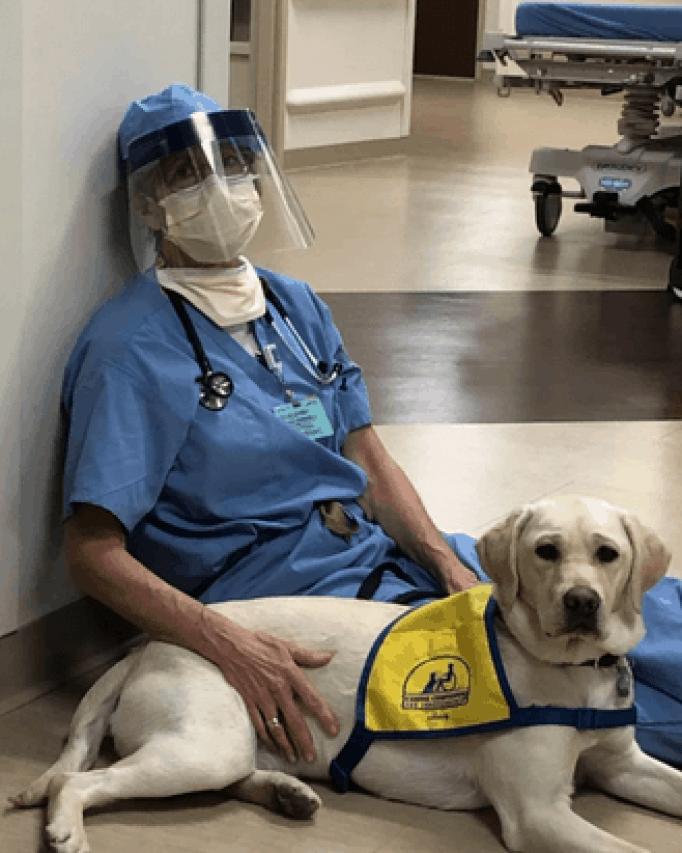 Service dog comforts health care professionals at Rose Medical Center in Denver.