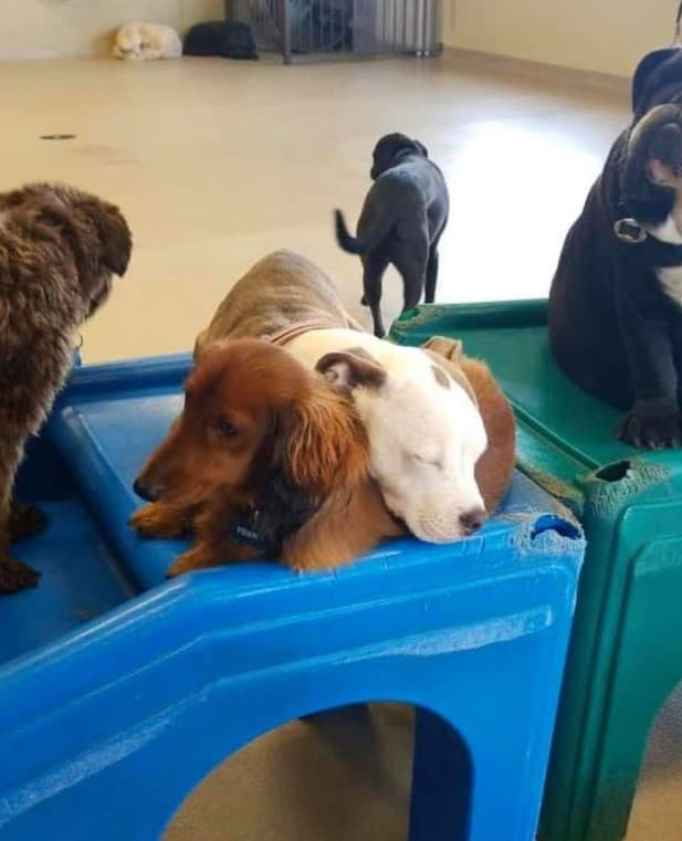 Busy dog day care center.