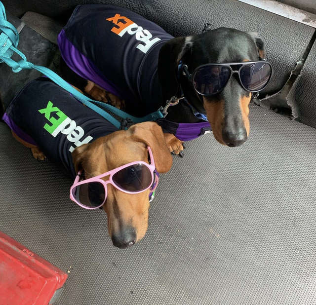 Groovy dogs go to work after puppy daycare closes