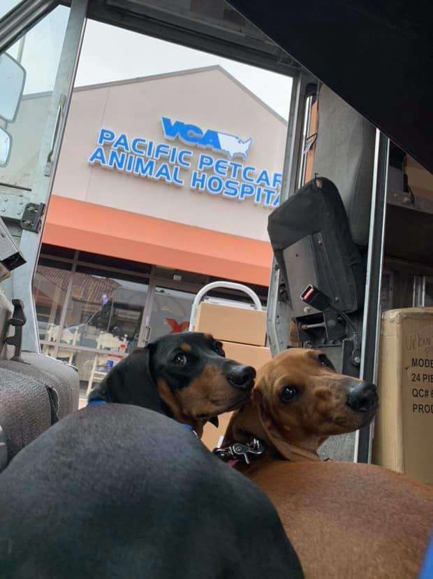 Dogs go to work with owner after puppy daycare closed