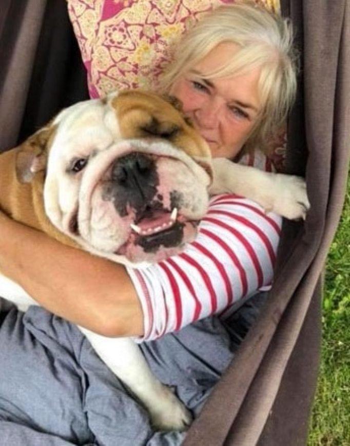 Bulldog make people smile on social media pages.