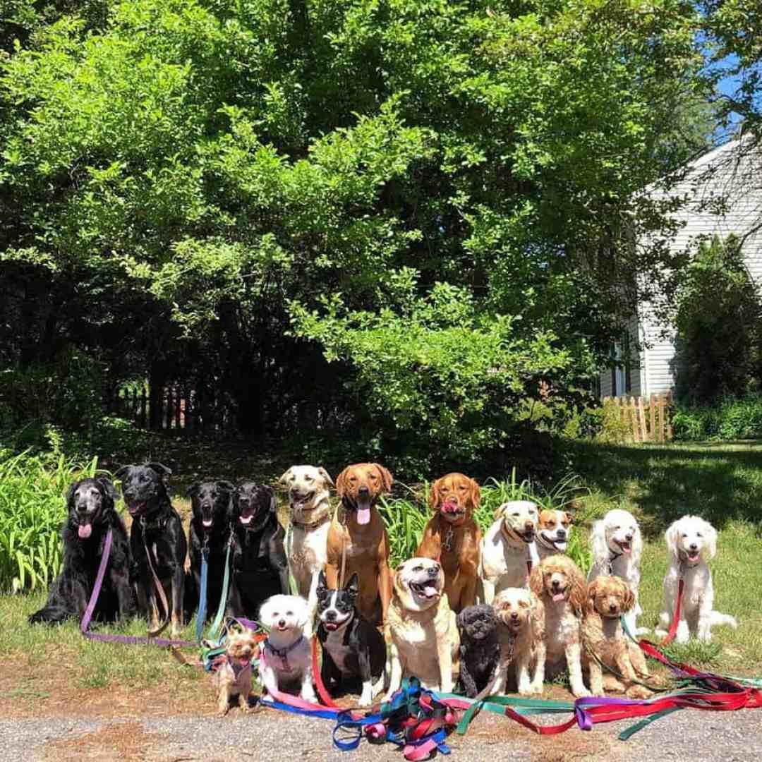 Passeador de cães tira todos os dias retratos adoráveis do estilo peludo de classe 15