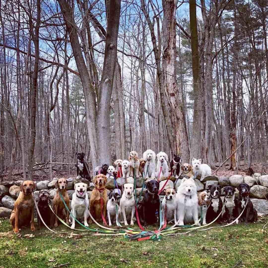 Passeador de cães tira todos os dias retratos adoráveis do estilo peludo de classe 18
