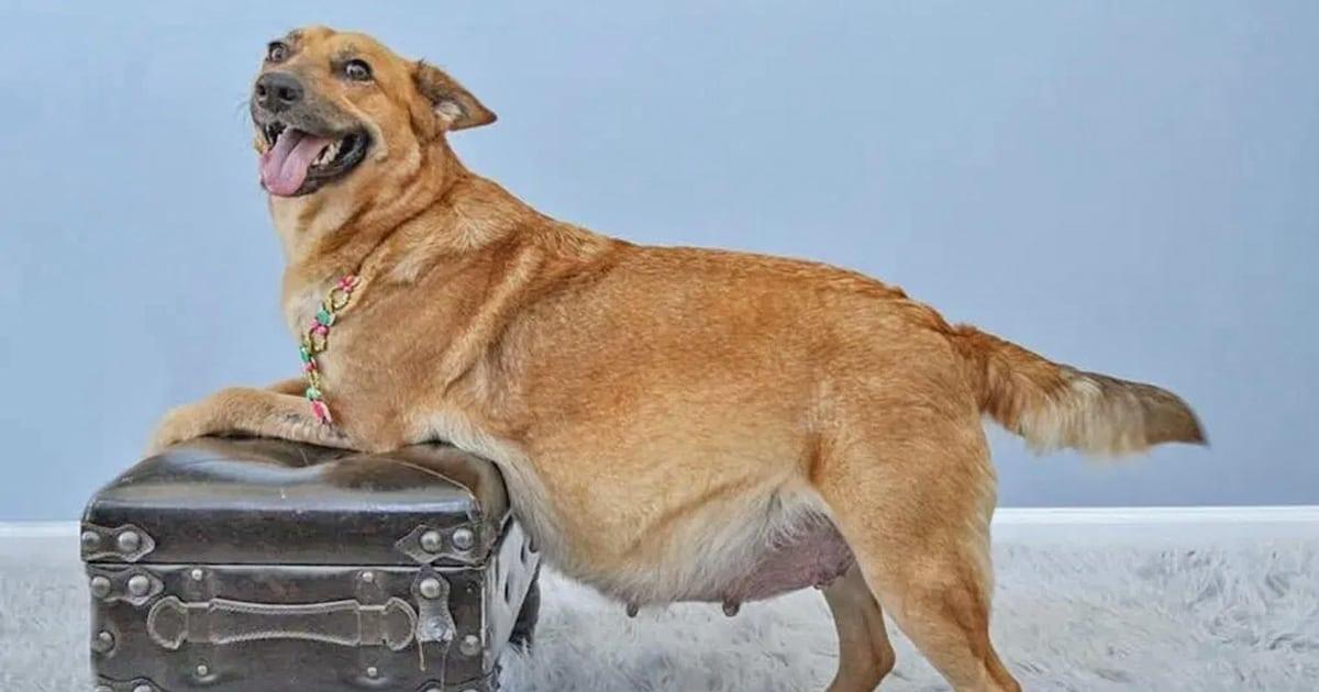 Três cadelas de resgate grávidas, cada uma com sua própria sessão de fotos de maternidade, veja as fotos adoráveis 1