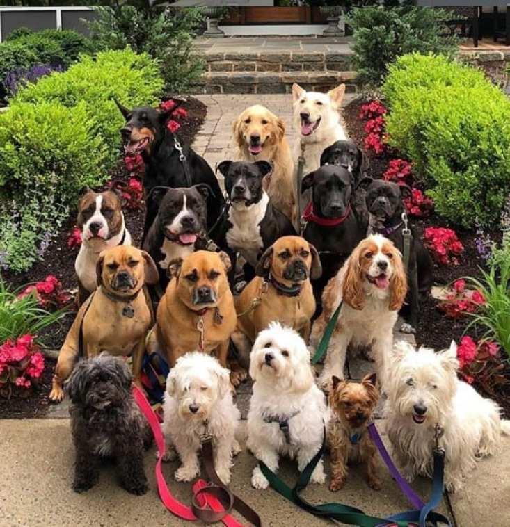 Passeador de cães tira todos os dias retratos adoráveis do estilo peludo de classe 16