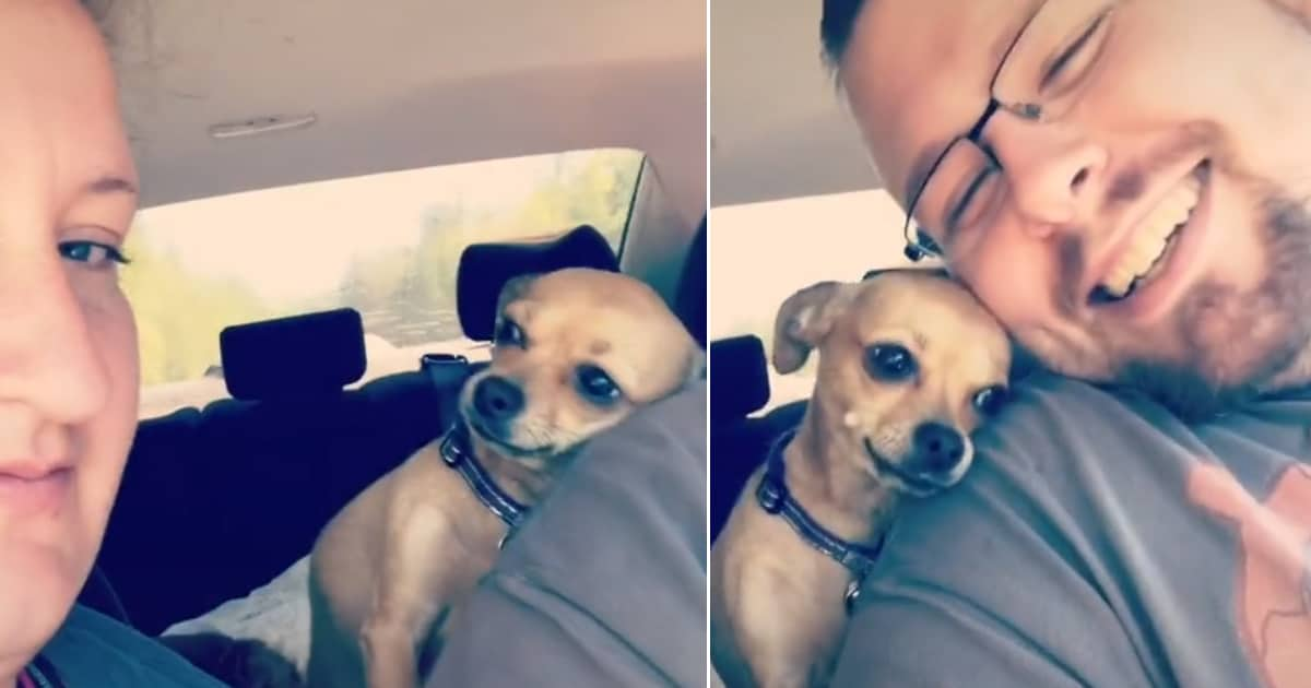 This tiny dog wants her dad's attention all to herself, and she's not afraid to let his wife know - my positive outlooks
