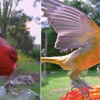 Woman installs camera to bird feeder to capture images of birds, see the stunning pics here
