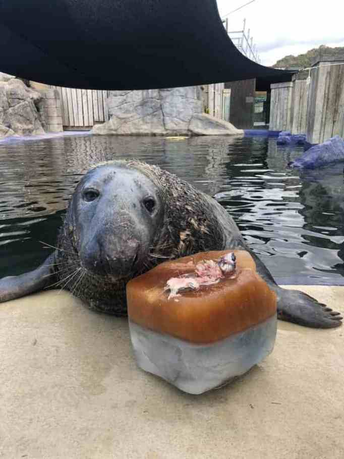 Yulelogs the seal with his ice fish cake