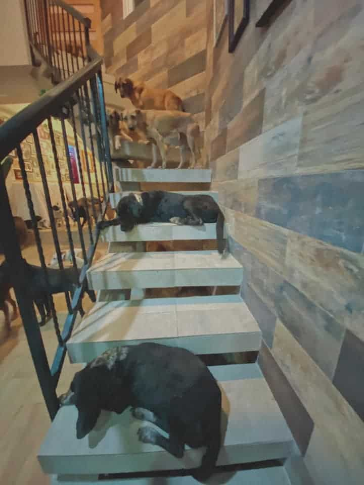 Stray dogs that Ricardo Pimentel welcomed in his home
