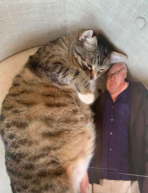 Quincy the cat who loves his Danny DeVito cutout