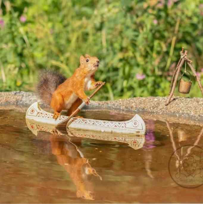 Squirrel rowing a mini canoe