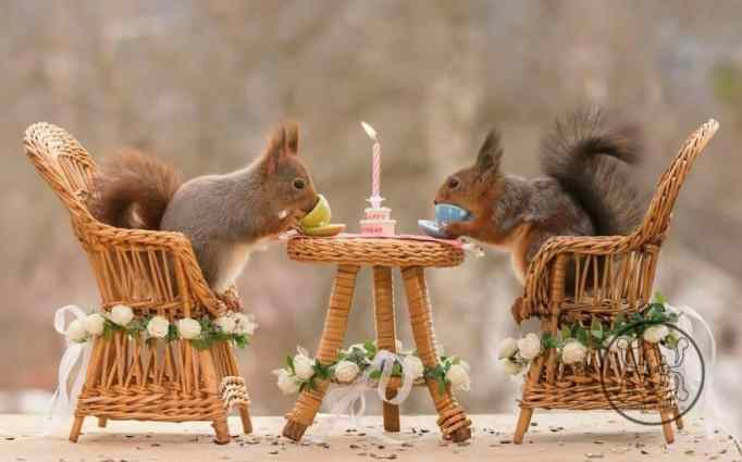 Two squirrels on a table drinking from mini tea cups