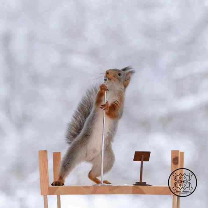 A squirrel using a microphone