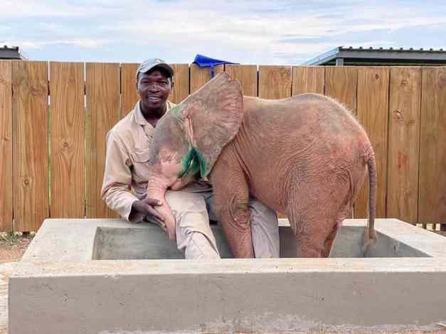 Caretaker with the elephant calf