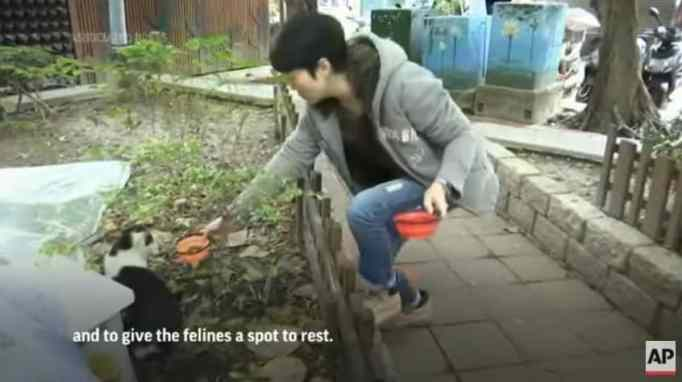 A woman feeding a stray cat