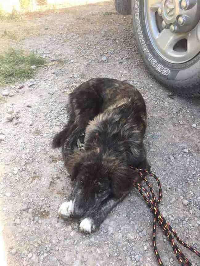 Бродячая собака, лежащая на земле