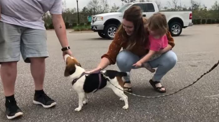 Lilly the beagle sniffing at her owner's hand