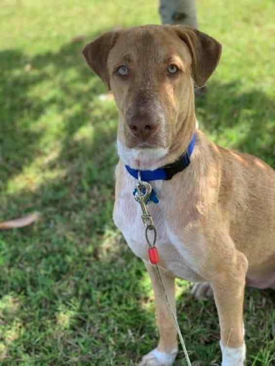 Собака Тоби спасена на Гуаме