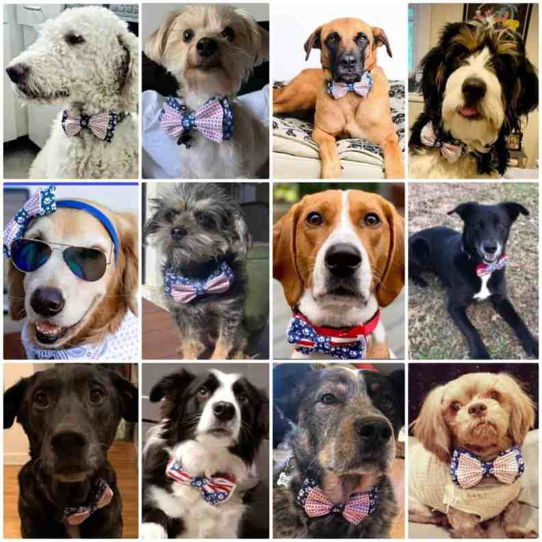 A collage of dogs wearing bow ties