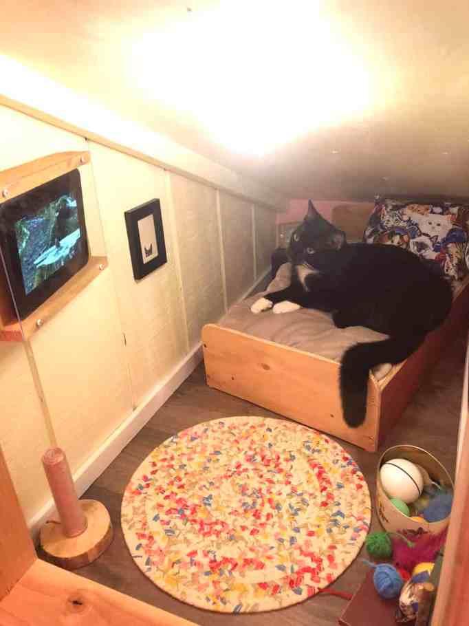 Кот на крошечной кровати смотрит видео с планшета
