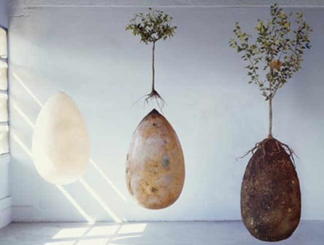 A rendering of what the Capsula Mundi burial urns would look like underground