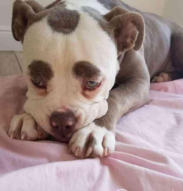 Madame Eyebrow with his adorable 'sad' face.
