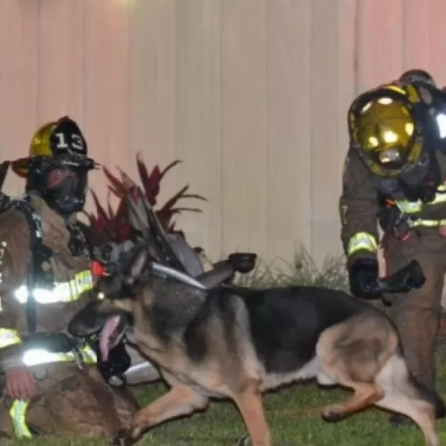 Firefighters and a German shepherd