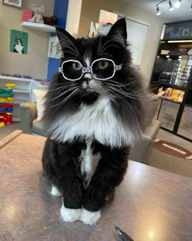 Truffles wearing glasses