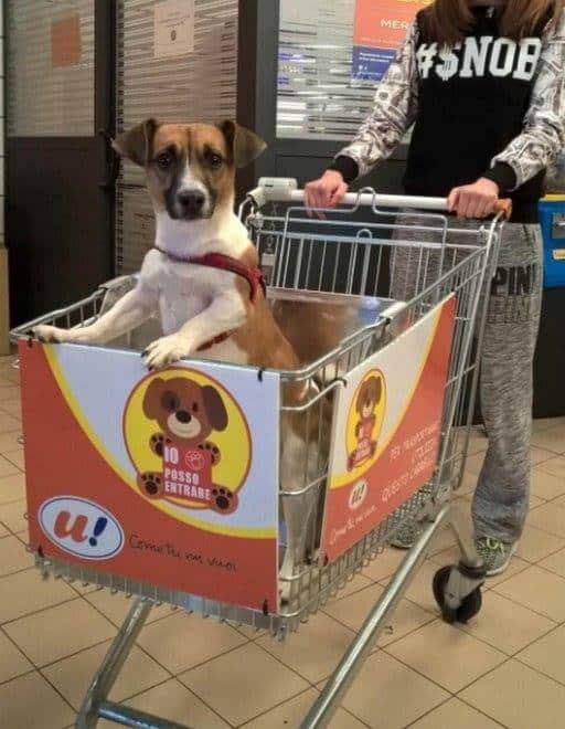 A dog in a shopping cart