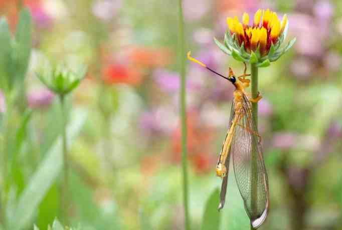 A dragonfly spending time on a lovely flower in a colorful garden.