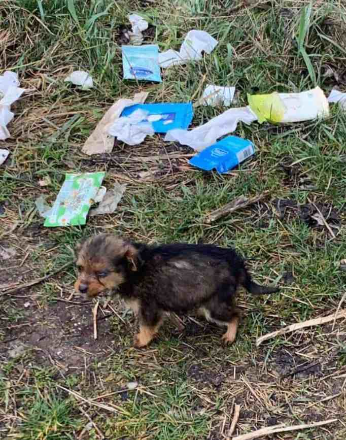 A pup found near a pile of trash