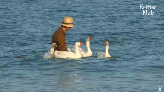 A grandma in the beach with her four geese