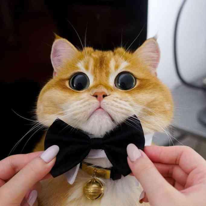 Pisco wearing a black bow tie