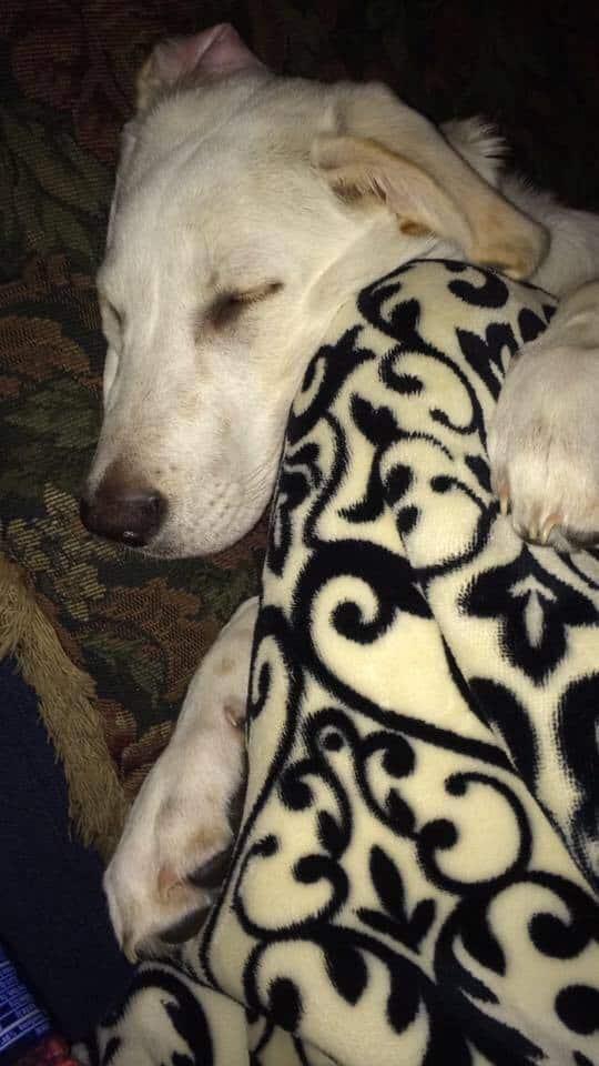 Cooper the dog