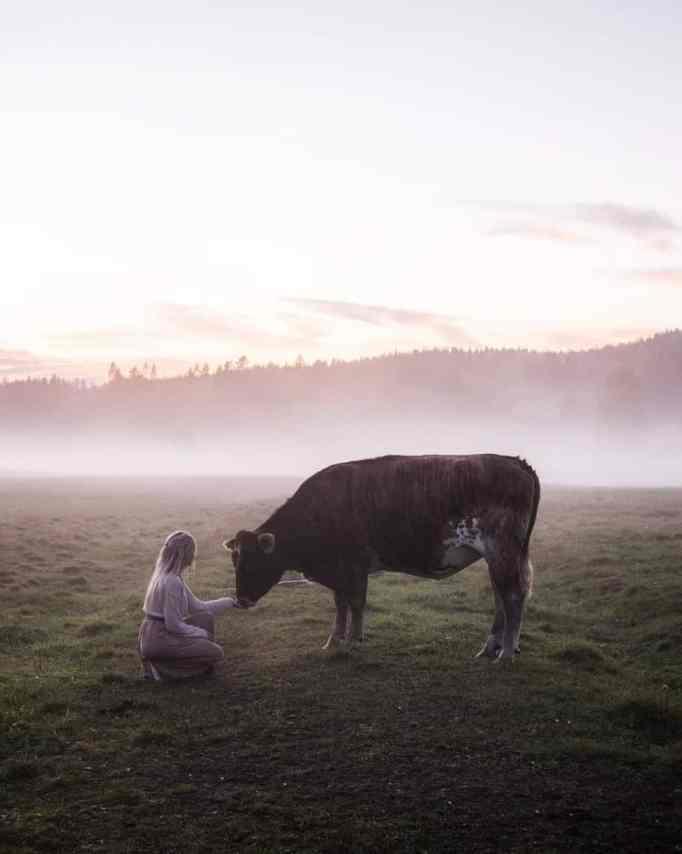 Jonna Jinton kneeling in front of a cow