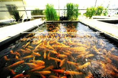 How to Fish Farming on Small Scale Business in Pakistan Investing & Earn Money