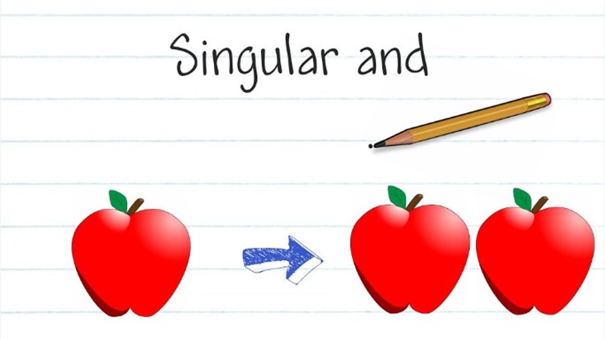 Nouns : Singular & Plural