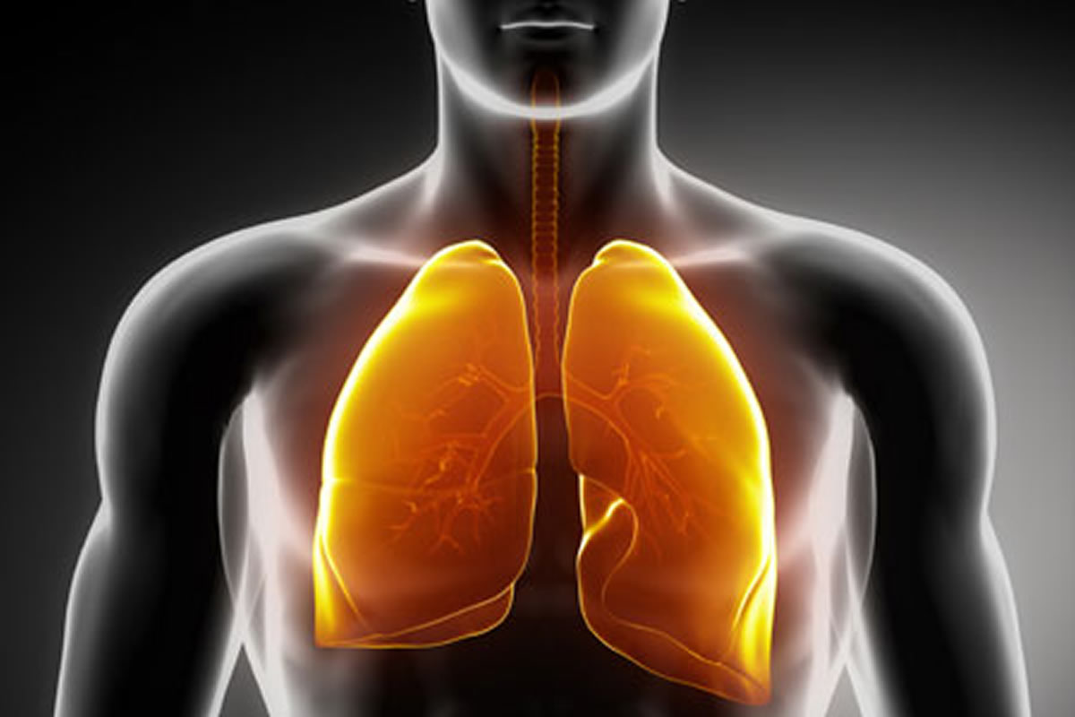 Human Body : Lungs