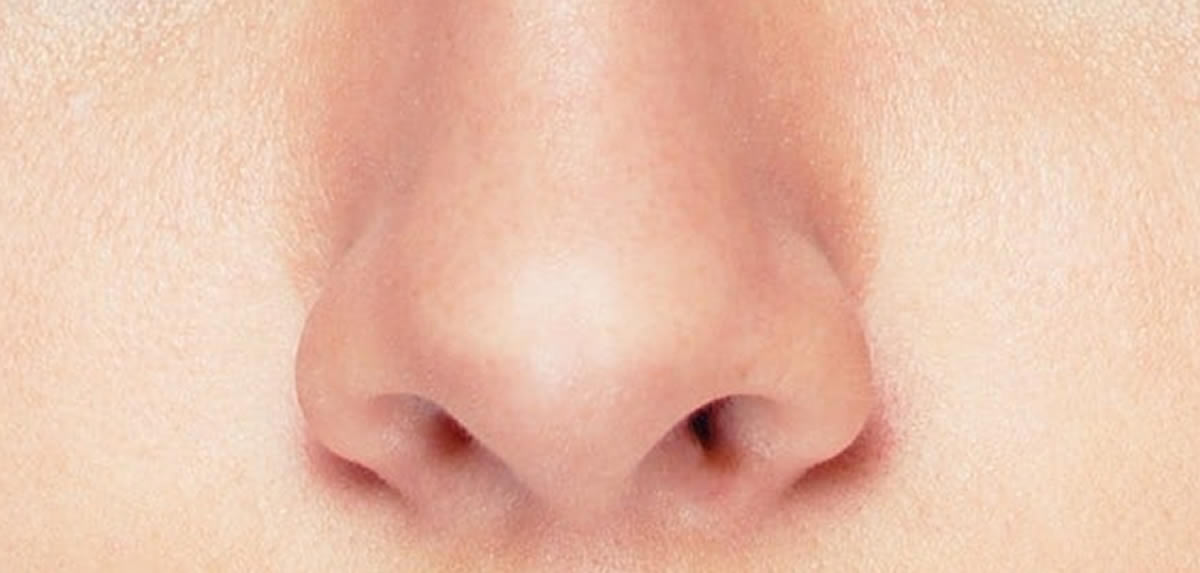 Human Body : Nose