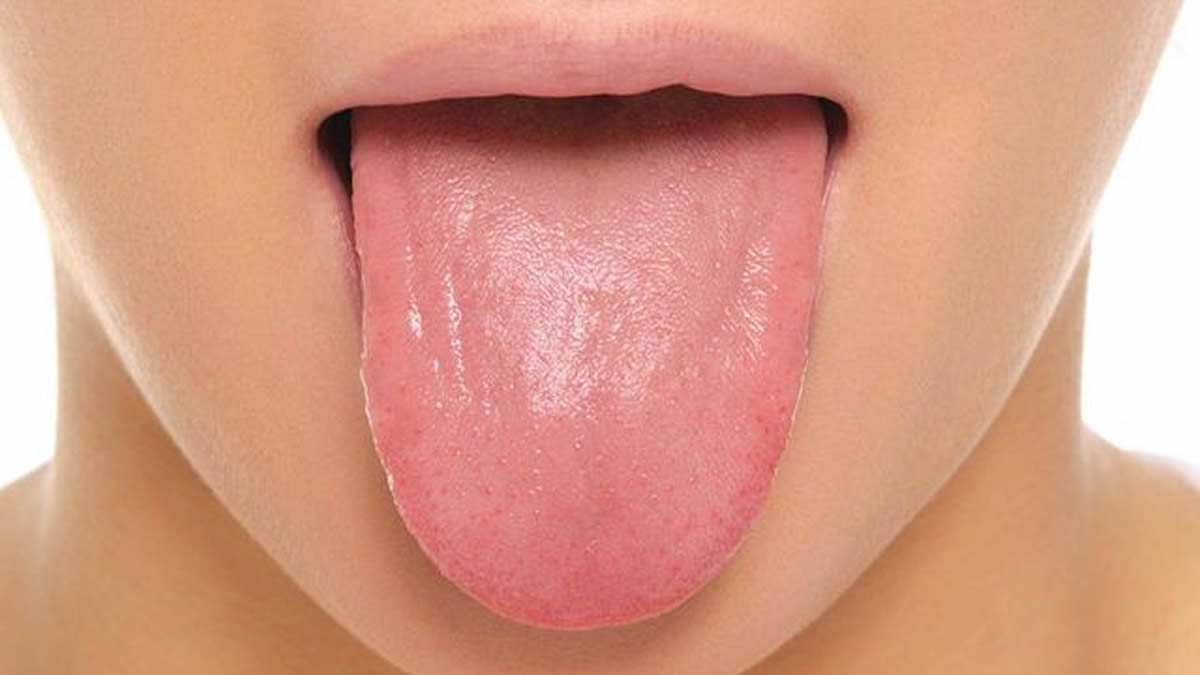 Human Body : Tongue