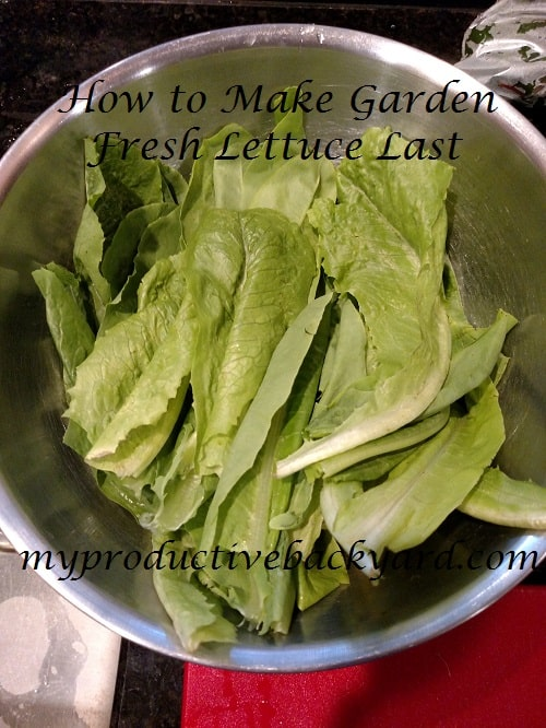 How to Make Garden Fresh Lettuce Last