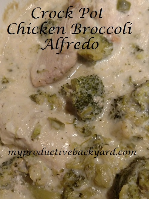 Crock Pot Chicken Broccoli Alfredo
