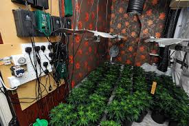 Beware Of Rental Properties Being Turned Into Cannabis Farms