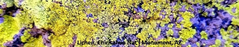 Lichens Chiricahua Nat Monument