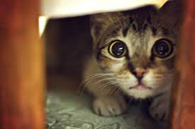 Image result for scaredy cat