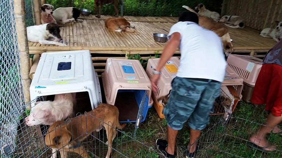 Inside Boracay: Week 6 Animal Rescue – Photo Credit AARRC Comment View full size 960×540
